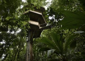 treehouse in the rainforest in costa rica